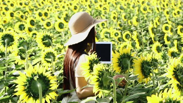 vídeos y material grabado en eventos de stock de mujer joven con vestido blanco disfruta en el campo de girasol. - sólo mujeres jóvenes