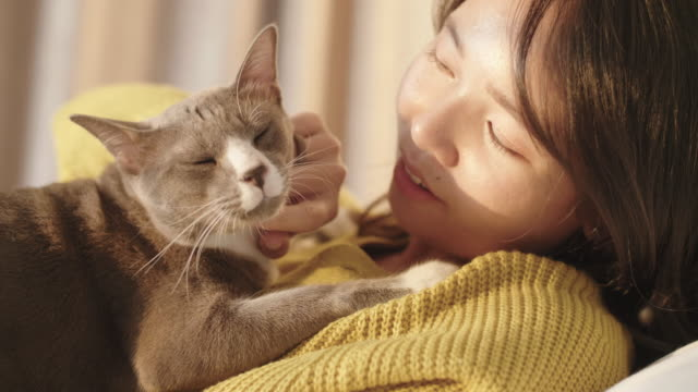 young woman in yellow clothing petting cat. - stroking stock videos & royalty-free footage