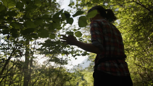 young woman inspecting leaves on trees in the woods - walking stock videos & royalty-free footage