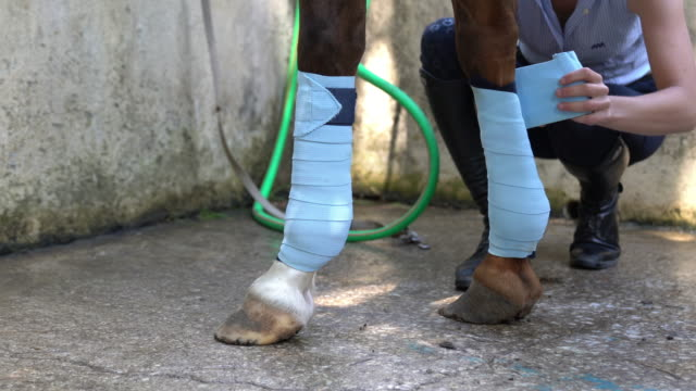 young woman is putting bandage or polo wraps to a horse - bedclothes stock videos & royalty-free footage