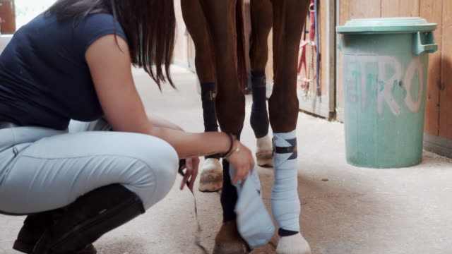 young woman is removing bandage or polo wraps from a horse legs - bandage stock videos & royalty-free footage