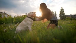 young woman is stroking dog face, looking at it and smiling, in blooming field in summer evening