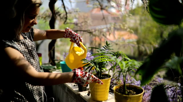 young woman is watering plants on terrace - building terrace stock videos & royalty-free footage