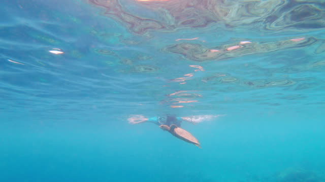 young woman looking at a sea turtle swimming in the sea - loggerhead sea turtle stock videos & royalty-free footage