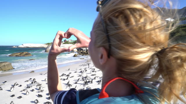 young woman making heart shape on african penguins colony - boulder beach western cape province stock videos and b-roll footage