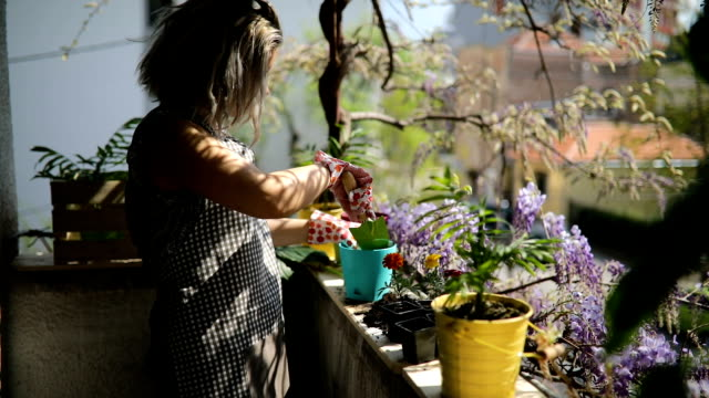 young woman on terrace is potting plants - giardinaggio video stock e b–roll