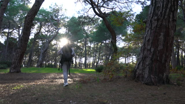 young woman on travel exploring nature on the forest - dorso umano video stock e b–roll