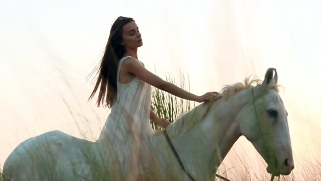 young woman pampering a horse in the forest, haryana, india - 働く動物点の映像素材/bロール