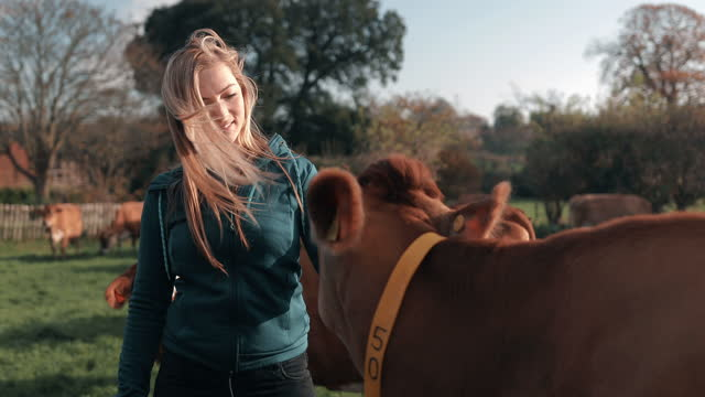 young woman petting cow on dairy farm - medium group of animals stock videos & royalty-free footage