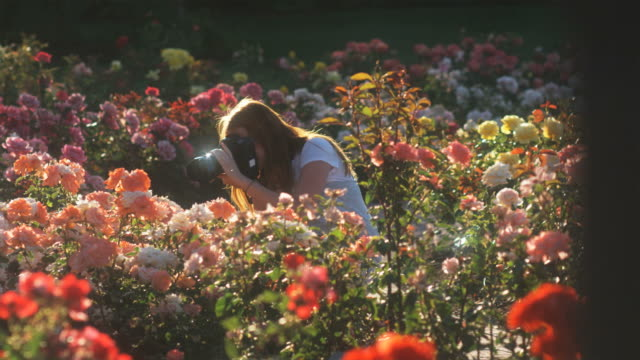 vídeos de stock, filmes e b-roll de slo mo ws pan young woman photographing flowers in summer garden, lehi, utah, usa - lehi