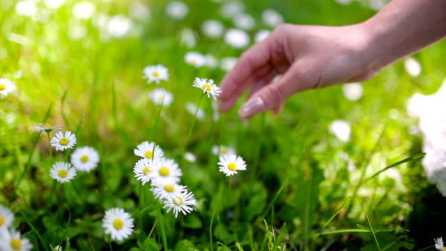 Junge Frau nahm Blumen