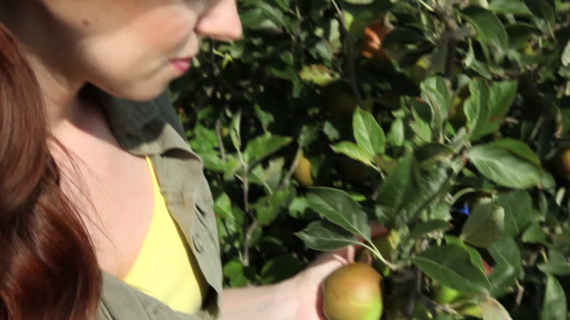 young woman picking and biting apple - haarzopf stock-videos und b-roll-filmmaterial