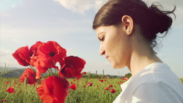 young woman picking poppies from the field. - picking harvesting stock videos and b-roll footage
