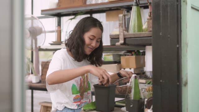 vidéos et rushes de jeune femme plantant l'usine de cactus - cactus pot