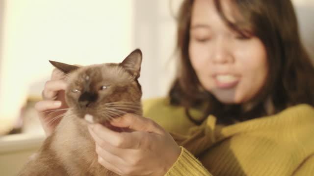 vídeos de stock, filmes e b-roll de jovem mulher brincando de gato de estimação na cama branca no quarto. - pet clothing