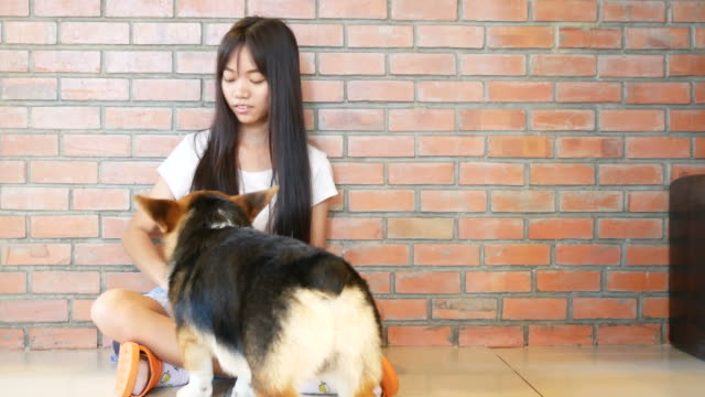 young woman playing with dogs tame - tame stock videos & royalty-free footage
