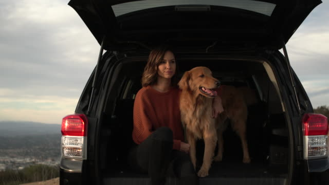 ms young woman playing with her dog in the back of a car. - boot stock videos & royalty-free footage
