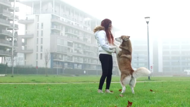 young woman playing with her dog - slow motion - pjphoto69 stock videos & royalty-free footage