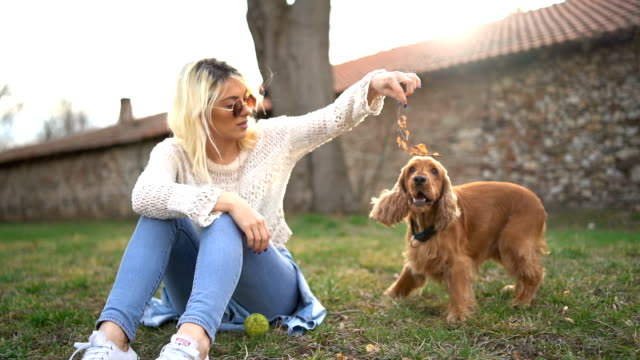 young woman playing with her dog - pet owner stock videos & royalty-free footage