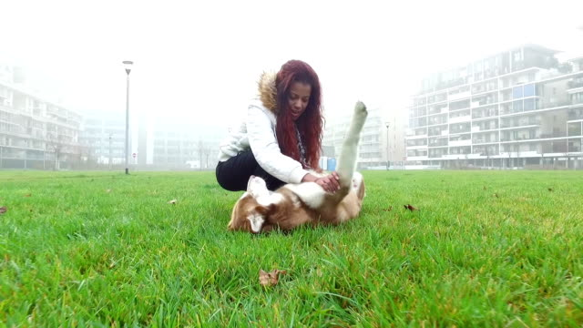 young woman playing with her dog - pjphoto69 stock videos & royalty-free footage