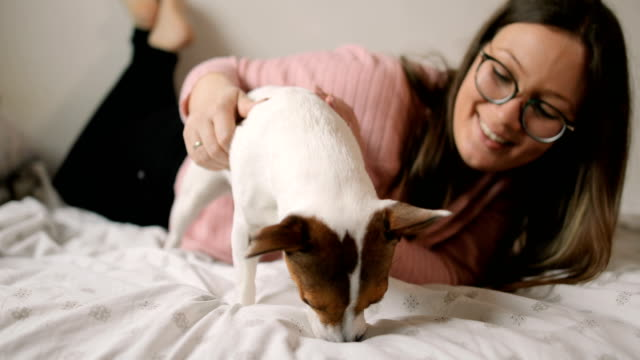 young woman playing with her puppy jack russell terrier dog - jack russell terrier stock videos & royalty-free footage