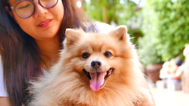 young woman playing with pomeranian dog - petite teen girl stock videos and b-roll footage