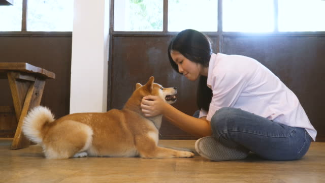 young woman playing with shiba inu, side view - cosy stock videos & royalty-free footage