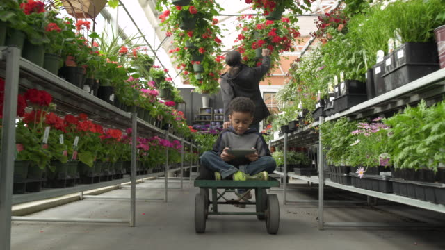 Young woman pulling her son on cart in a greenhouse