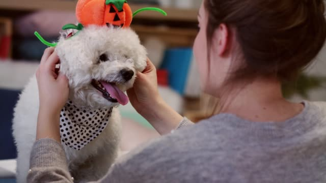 young woman putting a jack o' lantern accessory on her dog - pet clothing stock videos & royalty-free footage
