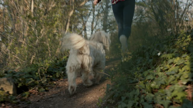 young woman running with dog in forest - baumbestand stock-videos und b-roll-filmmaterial