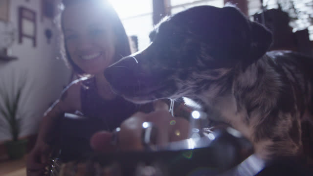 cu slo mo. young woman smiles as dog licks her face while she tunes her guitar. - hund stock-videos und b-roll-filmmaterial
