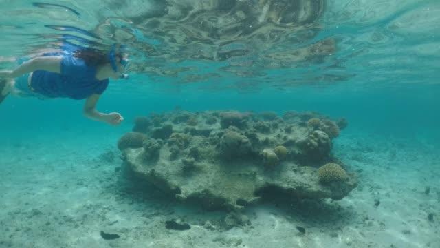 young woman snorkeling underwater in rarotonga  lagoon, cook islands. - rarotonga stock videos & royalty-free footage