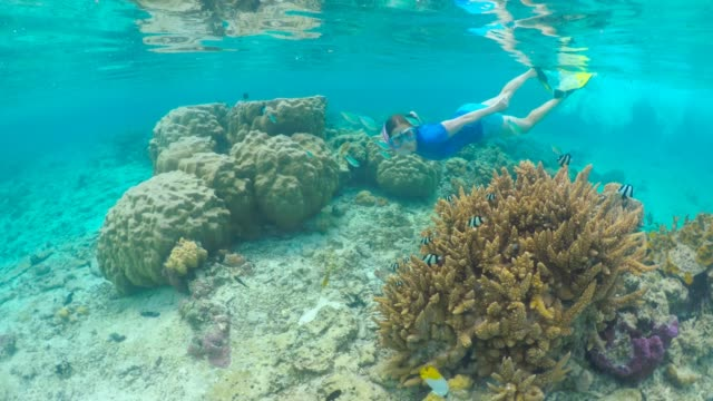 Young woman snorkeling underwater with tropical coral fish in Rarotonga  lagoon Cook Islands