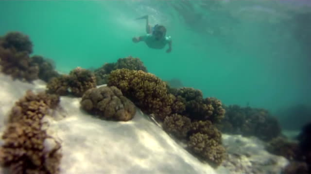 hd: young woman snorkeling - snorkelling stock videos & royalty-free footage