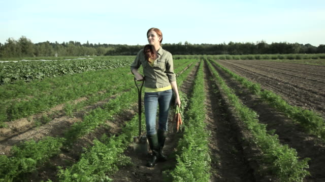 young woman standing in field with bunch of carrots - carrot stock videos and b-roll footage