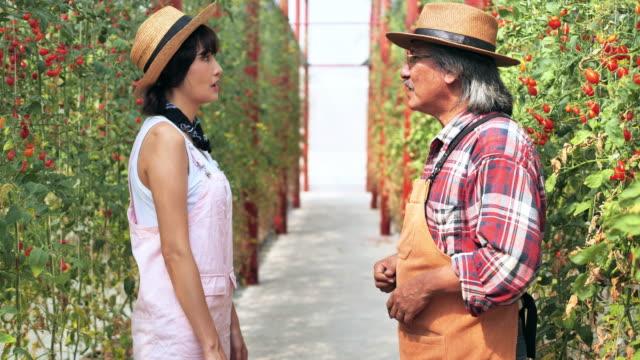 温室に立ち、シニア農家と握手する若い女性。オーガニックトマトを背景にした箱。 - 農作業点の映像素材/bロール
