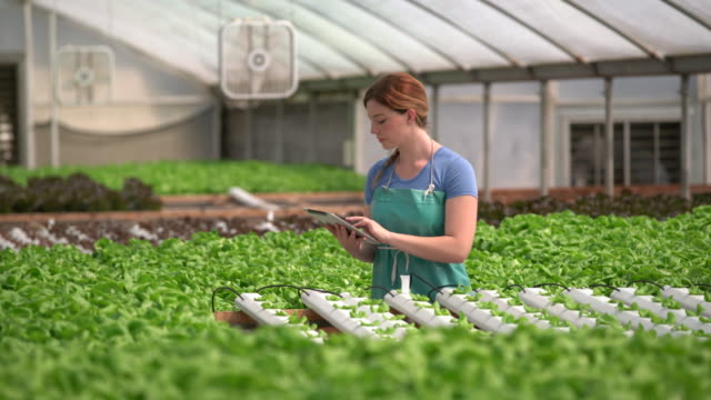 ms young woman studying the growth of plants - environment stock videos & royalty-free footage
