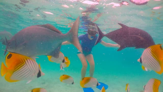 Young woman swim with Giant Trevally and tropical fish in Rarotonga Cook Islands
