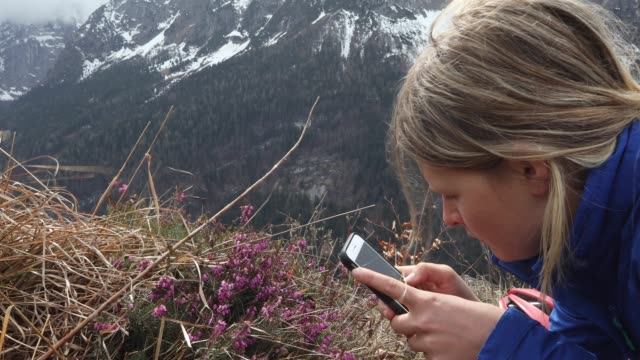 young woman takes smart photo pic of alpine flowers - photographing stock videos & royalty-free footage