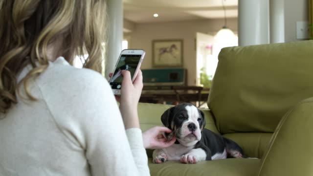 young woman taking a photo of a puppy lying in an armchair - photographing点の映像素材/bロール