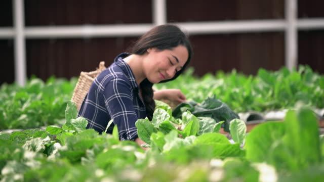 ts ms young woman taking care of her garden - 籠点の映像素材/bロール