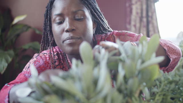 vidéos et rushes de cu young woman taking care of her houseplants - plante grasse