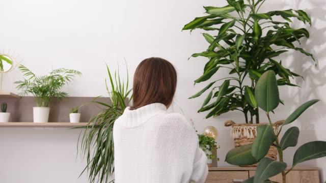 ung kvinna tar hand om krukväxter. hålla en sprayflaska och spraya hennes samling av vackra krukväxter - krukväxt bildbanksvideor och videomaterial från bakom kulisserna