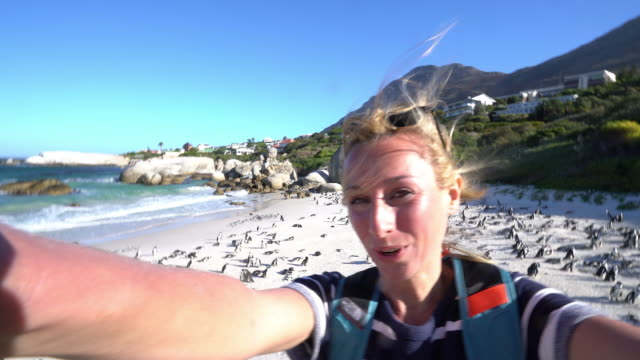 young woman taking selfie portrait with african penguins - boulder beach western cape province stock videos and b-roll footage
