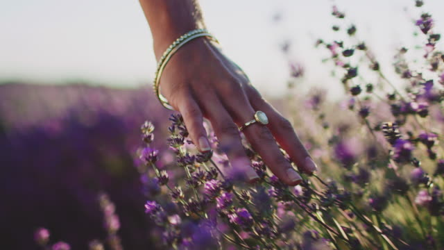 young woman touching lavender flowers in farm - land stock videos & royalty-free footage