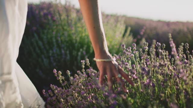 junge frau berührt lavendelblüten auf dem feld - frankreich stock-videos und b-roll-filmmaterial