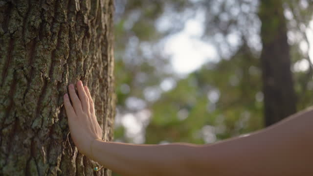 young woman touching tree gently with her hands and walking around it - tree trunk stock videos & royalty-free footage