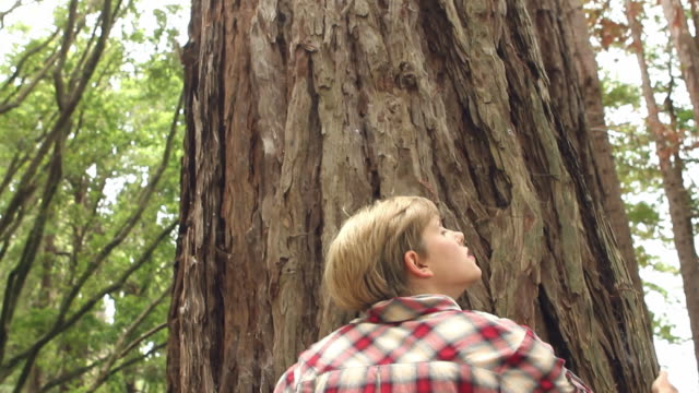 ms td young woman tree hugging / big sur, california, usa - tree hugging stock videos & royalty-free footage