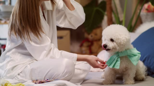 young woman tying a bow on her cute dog - dog knotted in woman stock videos & royalty-free footage