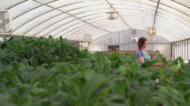 ws young woman using a digital tablet in a greenhouse - cabbage stock videos and b-roll footage